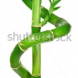 Stock Photo Asian Bamboo Forest With Morning Sunlight 341624