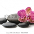 Stock Photo Orchid Laying On Stones 27025228